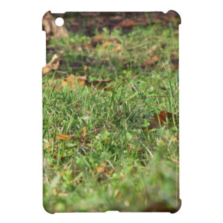 Close up of green grass field and autumn leaves case for the iPad mini