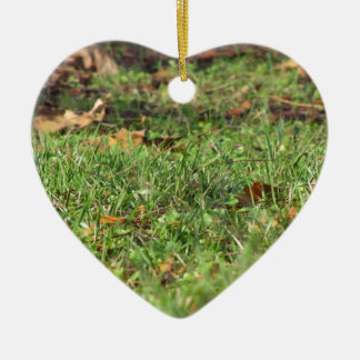Close up of green grass field and autumn leaves ceramic heart ornament