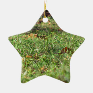 Close up of green grass field and autumn leaves ceramic star ornament