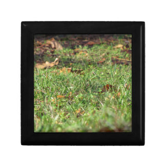 Close up of green grass field and autumn leaves gift box