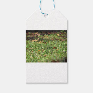 Close up of green grass field and autumn leaves gift tags
