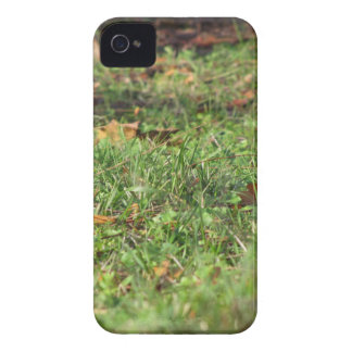 Close up of green grass field and autumn leaves iPhone 4 Case-Mate cases