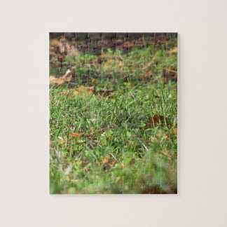 Close up of green grass field and autumn leaves jigsaw puzzle