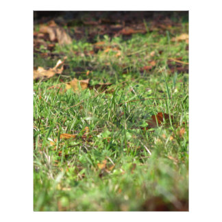 Close up of green grass field and autumn leaves letterhead