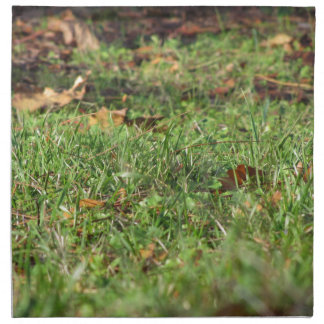 Close up of green grass field and autumn leaves napkin