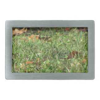 Close up of green grass field and autumn leaves rectangular belt buckles