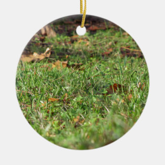 Close up of green grass field and autumn leaves round ceramic ornament