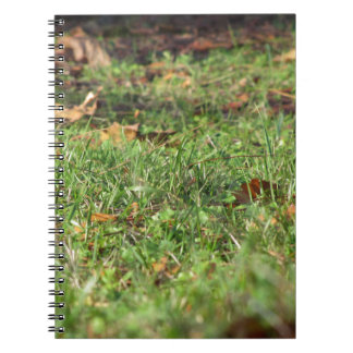 Close up of green grass field and autumn leaves spiral notebook