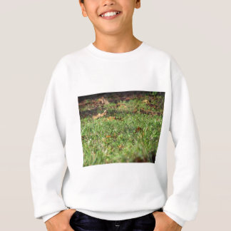 Close up of green grass field and autumn leaves sweatshirt