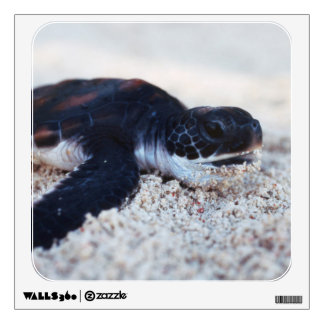 Close-Up of green sea turtle hatchings 1 Wall Sticker
