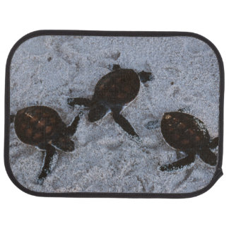 Close-Up of green sea turtle hatchings 2 Car Mat