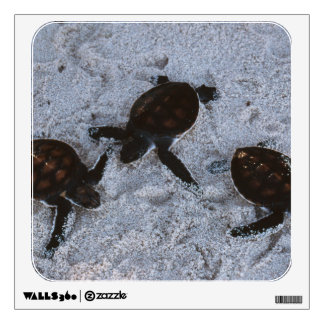 Close-Up of green sea turtle hatchings 2 Wall Decal