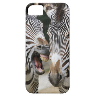 close-up of head of zebras, Equus Sp., Berlin iPhone 5 Cover