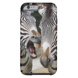 close-up of head of zebras, Equus Sp., Berlin Tough iPhone 6 Case