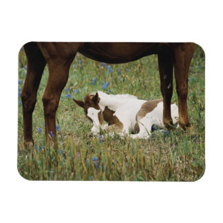 Close-up of Horse and Baby Colt Rectangular Photo Magnet