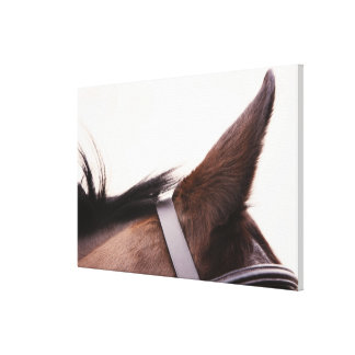 close-up of horses ear with bridal canvas prints