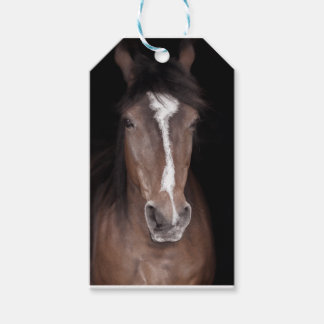Close up of horses face pack of gift tags