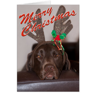 Close Up Of Labrador With Antlers Photograph Greeting Card