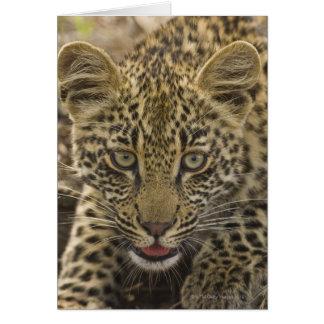 Close up of Leopard, Greater Kruger National 2 Card