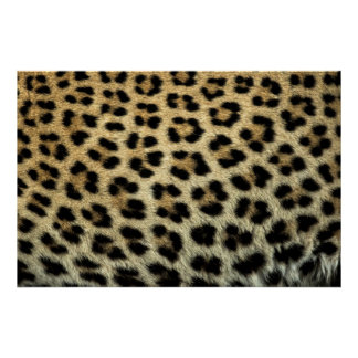 Close up of Leopard spots, Africa Poster