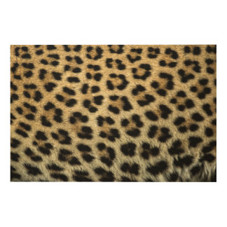 Close up of Leopard spots, Africa Wood Canvas