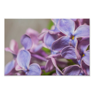 Close Up of Lilac Flower Photography Print