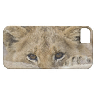 Close up of lion cub's face iPhone 5 cover