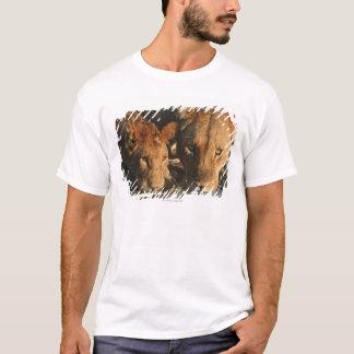 Close up of Lioness (Panthera leo) and cub T-Shirt