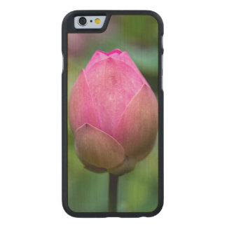 Close-up of lotus flower bud, Bali Carved Maple iPhone 6 Case
