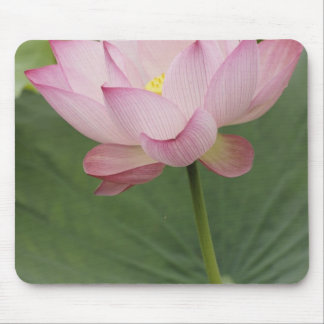 Close up of Lotus flower, Nelumbo nucifera), Mouse Pad