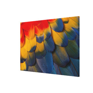 Close Up Of Macaw Feathers Canvas Print