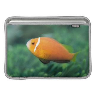 Close up of Maldives anemone fish, Maldives 2 MacBook Air Sleeve
