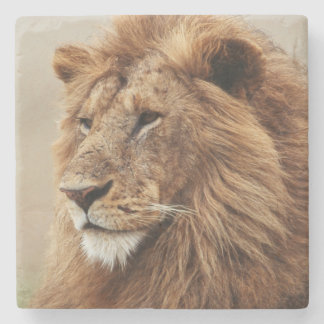 Close-up of male Lion Stone Coaster