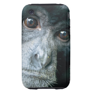 Close-up of monkey iPhone 3 tough cover