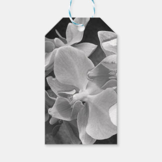 Close up of orchid blossoms in gray scale gift tags