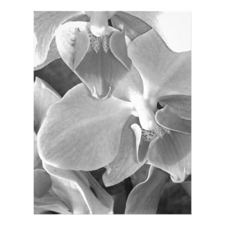 Close up of orchid blossoms in gray scale letterhead