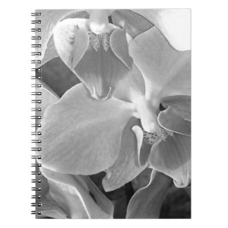 Close up of orchid blossoms in gray scale notebook