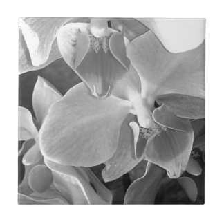 Close up of orchid blossoms in gray scale tile