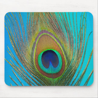 Close up of peacock feather mouse pad