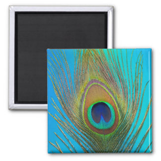 Close up of peacock feather square magnet