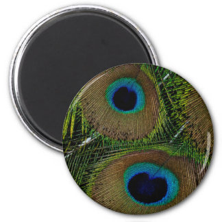 Close-up of peacock feathers 2 inch round magnet