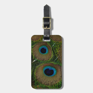 Close-up of peacock feathers luggage tag