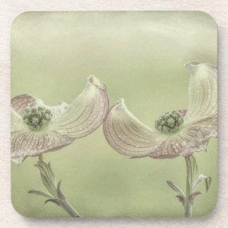 Close-up of Pink Dogwood Blossoms | Seabeck, WA Coaster
