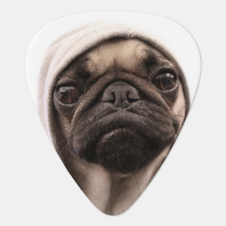 Close up of pug wearing hoodie. guitar pick