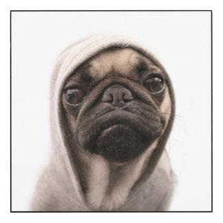 Close up of pug wearing hoodie.