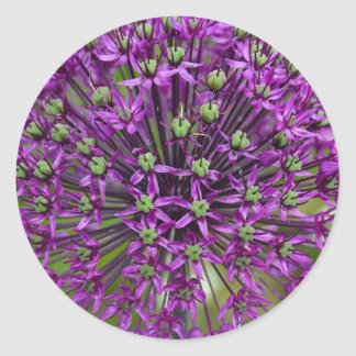 Close up of purple allium flower classic round sticker