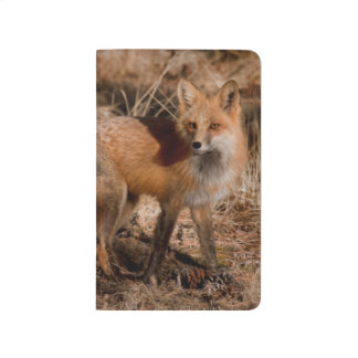 Close-up of red fox journal