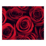 Close up of red rose flowers. poster