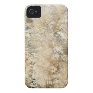 Close-Up of Tall Pampas Grass Plumes iPhone 4 Case-Mate Cases