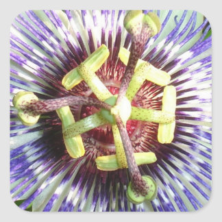 Close Up of The Centre Of a Passiflora Flower Square Sticker